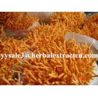Buy cheap Cordyceps Sinensis Extract,Polysaccharides 15%, Enhance immunity, Reishi Mushroom Extract ,Polysaccharides 30%, Chinese from wholesalers