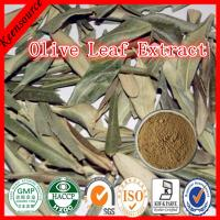 Buy cheap Olive Leaf Extract/Olea Europaea Leaf Extract/ Olive leaf powder from wholesalers