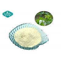 Buy cheap Sweet Tea Extract 70% Rubusoside 100% Natural Sweetener with Low Calorie from wholesalers