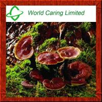 Buy cheap High quality Natural Red Reishi Mushroom Extract for liver protecting product