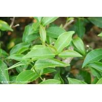 Buy cheap Green tea P.E. from wholesalers