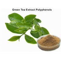 Buy cheap Organic Green Tea Extract Weight Loss , Bulk Supplements Green Tea Extract Anti - Cancer from wholesalers