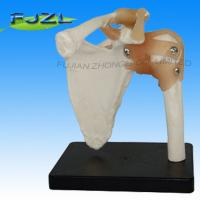 Buy cheap Human Skeleton Life-size plastic shoulder joint model for education product