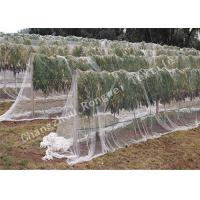 Buy cheap 45gsm 10mm Hexagon Mesh Anti-bird Net for Grapes / Heavy Duty Woven Garden Netting from wholesalers