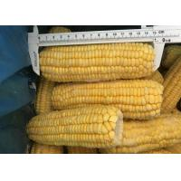 Buy cheap 100% Fresh IQF Frozen Vegetables , High Grade Whole Sweet Sticky Corn from wholesalers