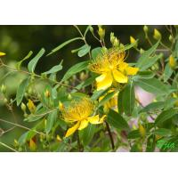 Buy cheap St. Johns Wort extract from wholesalers