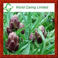 Buy cheap Natural Extract Artichoke Extract/CAS.NO.:30964-13-7 Cynarin 2.5%-5% for liver from wholesalers