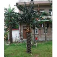 Buy cheap date palm tree from wholesalers