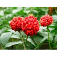 Buy cheap Rhodiola Rosea extract Salidroside 1%-5% herbal extract , Rosavins 2%-5%, natural ingredient for cosmetic, food, pharma product