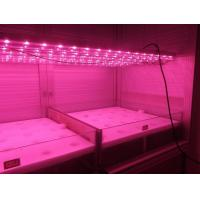 Buy cheap T8 tubes led grow light, for tissue culture and indoor planting,vegetables and herbs from wholesalers