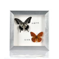 Buy cheap Wholesale square solid wood shadow box frame for butterfly marcos 3d molduras para fotos from wholesalers