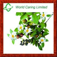 Buy cheap Natural Pure Camellia seed oil physical cold pressed and refined from wholesalers