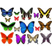 Buy cheap CMYK butterfly tattoo Fake womens temporary tattoos Long lasting from wholesalers
