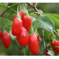 Buy cheap Supply Goji Extract Powder (Lycium Chinense Extract) from wholesalers