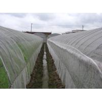 Buy cheap Anti Insect Net 50x35mesh,growing and agriculture using,greenhouse using  50-140g/m2  0.5m-6m width   black,white product