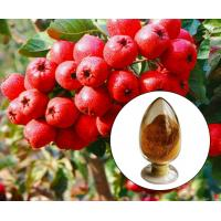 China Hawthorn Leaves / Berry Extract.Brown Powder,Herbal Extract/Plant Extract on sale