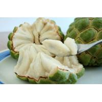 Buy cheap Natural Plant Extract Powder Graviola Fruit--Annona Muricata L from wholesalers