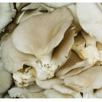 Buy cheap Pleurotus ostreatus Extract 25% from wholesalers