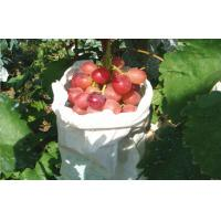 Buy cheap Edible Vine Table Red Globe Grapes Containing Anthocyanins Health-Protective from wholesalers