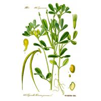 Buy cheap Fenugreek extract from wholesalers