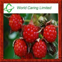 Buy cheap High Quality Herbal Ingredient raspberry extract 98% Raspberry Ketones HPLC from wholesalers