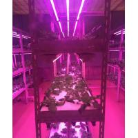 Buy cheap Full Spectrum T8 LED Grow Tube With Zigbee Dimming System Local Control and from wholesalers