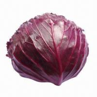 China Fresh Purple Cabbage, Natural Pure Purple, Good Taste on sale