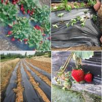 Buy cheap Agriculture and garden mulch plastic film from wholesalers