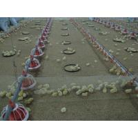 Buy cheap broiler poultry farm equipment from wholesalers