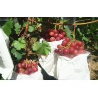 Buy cheap Sweet Juicy Red Globe Grapes Containing Protein , Mineral Substance from wholesalers