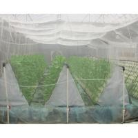 Buy cheap Plain Weaving Insect Mesh Netting 0.6 * 0.6mm Odorless White For Small Shed product