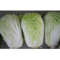 China No Rotten Chinese Napa Cabbage / Bok Choy Contains Vitamin K , C , ISO 9001, The leaf surface smooth on sale