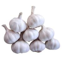 Buy cheap Wholesale garlic extract from wholesalers