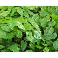 Buy cheap Biological Epimedium Herb, Horny Goat Weed Herb Chinese Herbal Medicines from wholesalers