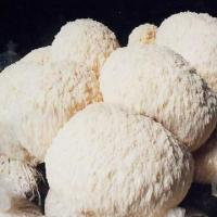 Buy cheap Hericium Erinaceus Extract from wholesalers