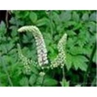 Buy cheap Black Cohosh P.E. from wholesalers