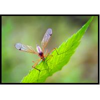 Buy cheap 52918-63-5 Systemic Pesticides For Mosquito Control 2.5% Deltamethrin WP from wholesalers