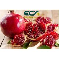 Buy cheap Zakuro;beverages and cakes; Beauty effect, Oraganic Food Ingredients, Pomegranates Powder, Curing stomach problems from wholesalers