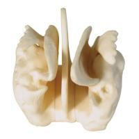 Buy cheap Amplified Ethmoid bone Human Anatomy model for medical center training from wholesalers