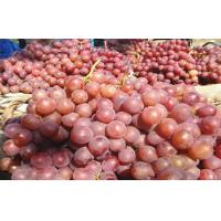 Buy cheap Nutritious Black / Red Globe Grapes Cotaining Vitamin E , C Preventing CHD, Tender and juicy, Hardness from wholesalers