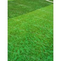 Buy cheap Soccer Synthetic Grass Infill TPV Eco Rubber Granulate Heat Resistance product