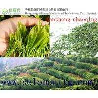 Buy cheap buy green tea: 2015New Chinese Organic Green Tea-Hanzhong Chaoqing Third Grade from wholesalers