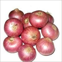 China 8cm Fresh Onion Without Pesticide Residue , Including Vitamins And Minerals on sale