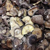Buy cheap Factory Price Organic Dried Mushroom Shiitake Broken Whole in Bulk from wholesalers