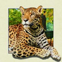 China Custom Lenticular Image Printing For Gift , 5d Animal Collage Poster 15.7x15.7 Inches on sale