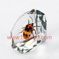 Buy cheap real insect amber novel Paperweight,novel resin crafts from wholesalers