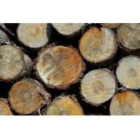 Buy cheap Nigeria Koso wood supplier from wholesalers