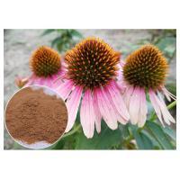 Anti-Virus Chicory acid Polyphenols Echinacea pururea Extract Powder