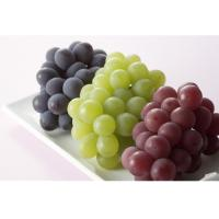 Buy cheap pure grape juice powder factory wholesale with rich experience in EU market (Vitis vinifera L) from wholesalers