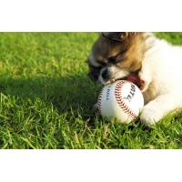 Buy cheap Official Baseball made of cowhide leather from wholesalers